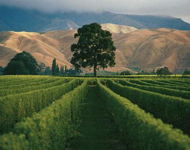 wine tasting NZ